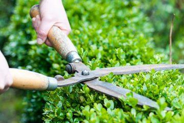 Prato e cura del giardino